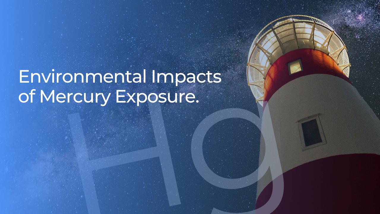 The environmental impacts of mercury exposure