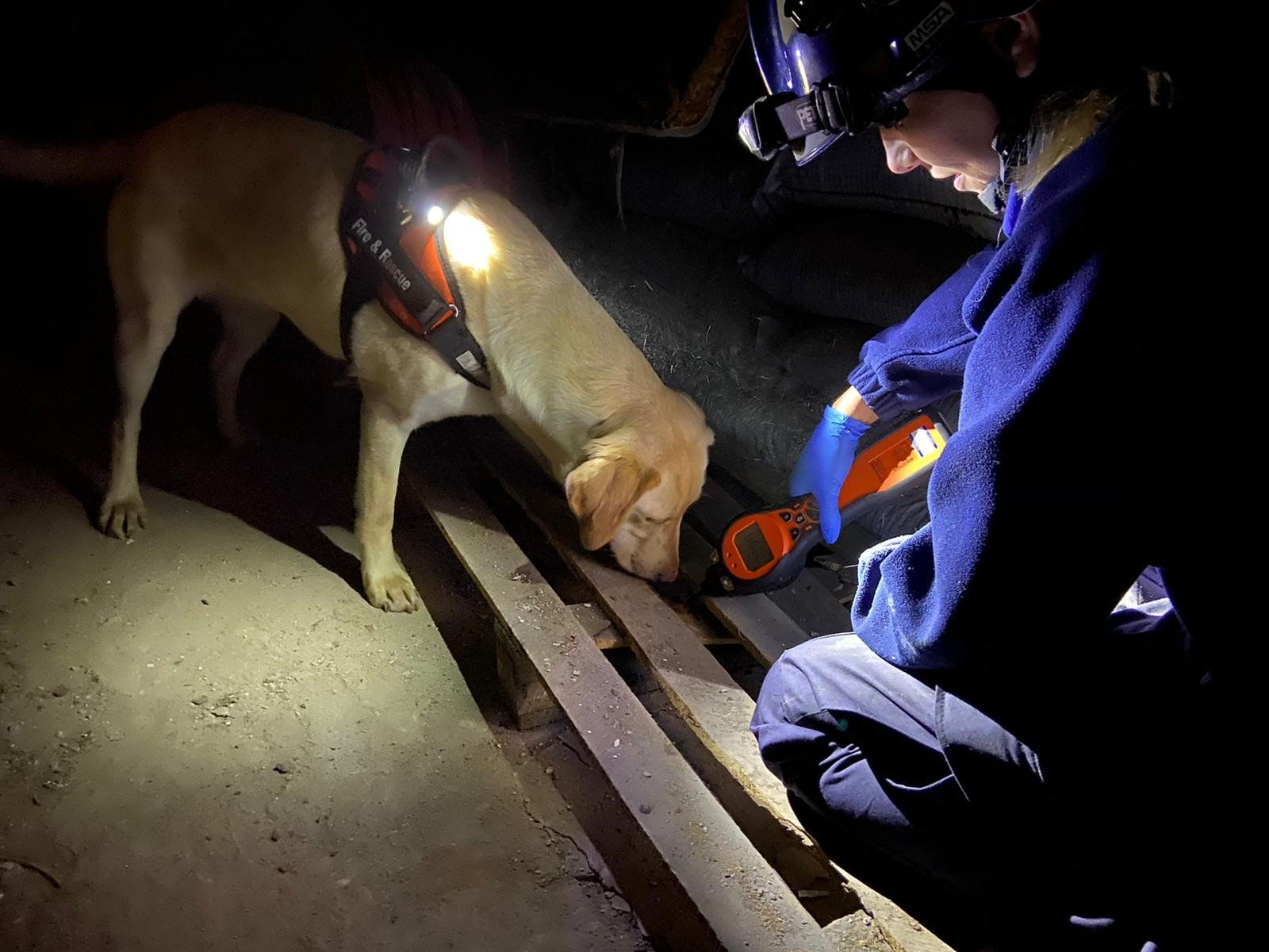 Dogs & Tigers:The Perfect Combination for Fire Investigation